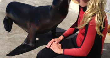 Animal trainer receives a sea lion kiss